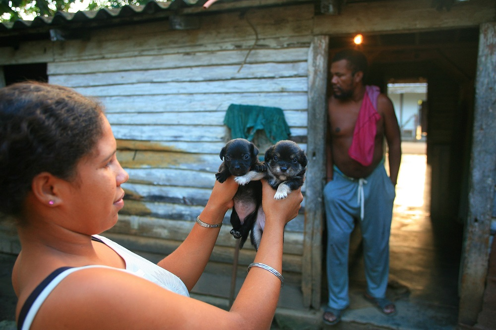 woman puppies dogs villa clara cuba